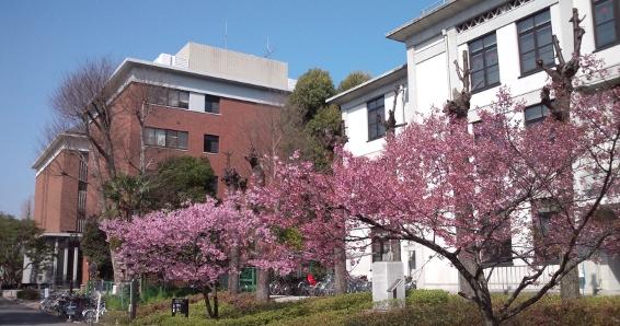 基礎 物理 学 研究 所